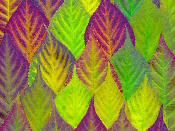 testimonial-leaf-pic-1-1