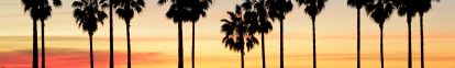 palm-trees-trunks-banner